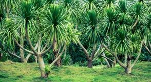Een tropische installatie Stock Foto's