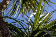 Een tropische textuur De zononderbrekingen door de bladeren stock foto's