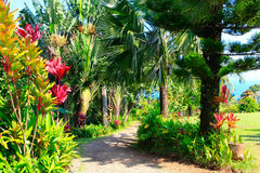 Een tropische tuin Tuin van Eden, Maui Hawaï Stock Afbeelding