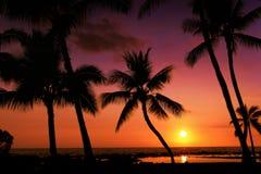 Een tropische zonsondergang stock afbeeldingen