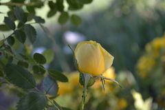 Een tuin Royalty-vrije Stock Fotografie