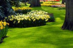 Een tuin in de lente stock afbeeldingen