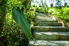 Een tuin op het Canggu-gebied van Bali stock foto's