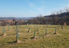 Een tuin van jonge boompjes van jonge fruitbomen die op een groene heuvel tegen de achtergrond van een schilderachtig landschap w royalty-vrije stock afbeeldingen
