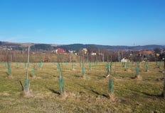 Een tuin van jonge boompjes van jonge fruitbomen die op een groene heuvel tegen de achtergrond van een schilderachtig landschap w royalty-vrije stock afbeelding