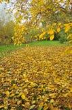 Een tuinhoogtepunt van gele bladeren op het gras royalty-vrije stock foto