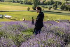 Een `-Tuinhoogtepunt van lavendel ` door Barbara en Andrzej Olender in Ostrà ³ w 40 km van Krakau wordt geschikt dat De geur en d stock foto