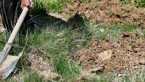 Een tuinman, arbeider die de grond graven, die met schop werken stock footage