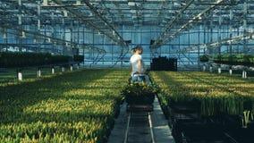 Een tuinman beweegt bossen van bloemen, gebruikend een grote kar in een serre stock videobeelden