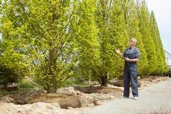 Een tuinman in overall onderzoekt gekochte bomen in tuinwinkel stock foto's