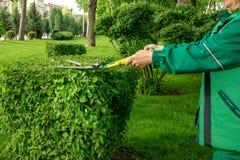 Een tuinmanvrouw in een groen werkend kostuum snijdt struiken met scharen of schaar in een park stock fotografie