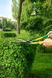 Een tuinmanvrouw in een groen werkend kostuum snijdt struiken met scharen of schaar in een park stock afbeelding