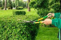 Een tuinmanvrouw in een groen werkend kostuum snijdt struiken met scharen of schaar in een park stock foto