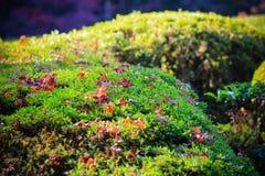 Een tuinmening tijdens de herfstperiode Stock Foto