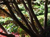 Een tuinscène royalty-vrije stock foto