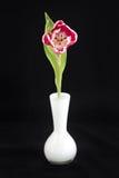 Een tulp in een witte vaas Stock Fotografie