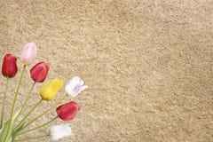Een tulpenbos royalty-vrije stock foto's