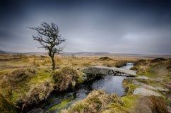 De winter op Dartmoor Royalty-vrije Stock Foto's