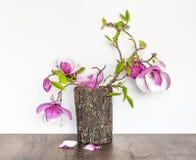 Een Twijg van Bloeiende Magnolia in de Schors van een Boom royalty-vrije stock foto
