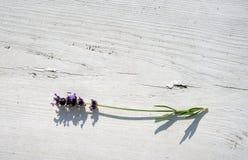 Een twijg van lavendel op een witte houten oppervlakte stock afbeelding