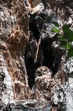 Een uilzitting in de holte van een boom royalty-vrije stock afbeeldingen