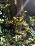 Een uiterst klein gras Stock Foto's
