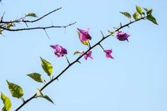 Een uiterst klein stuk van stam dat een paar bladeren en roze bloemen heeft royalty-vrije stock fotografie