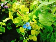 Een uiterst kleine bloem Stock Foto's