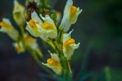 Een uiterst kleine spin op een uiterst kleine bloem Stock Foto