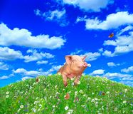 Een varken kijkt uit van achter een heuvel in een de zomerweide royalty-vrije stock fotografie