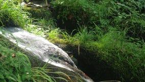 Een veebron is een kreekwaterval in het de zomerbos stock videobeelden