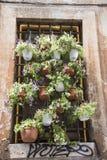 Een vensterhoogtepunt van bloempotten op een straat Royalty-vrije Stock Afbeeldingen