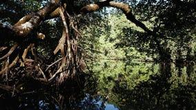 Een ver eiland in Raja Ampat, Indonesië wordt omzoomd door mangrovebos stock foto's