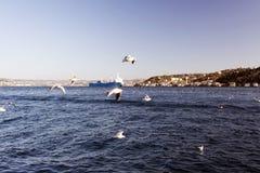 Een verbazende mening van zeemeeuwen en het overzees en de grote tanker die door bosphorus van Istanboel overgaan Stock Foto's