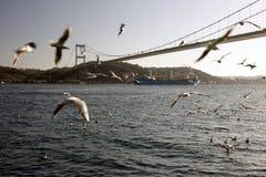 Een verbazende mening van zeemeeuwen en het overzees en de grote tanker die door bosphorus van Istanboel overgaan Royalty-vrije Stock Fotografie