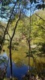 Een verborgen Appalachian vijver stock afbeeldingen