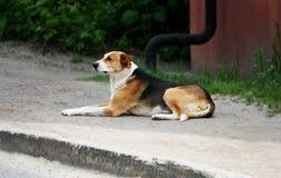Een verdwaalde grote hond Royalty-vrije Stock Fotografie
