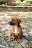 Een Verdwaalde Hond Stock Afbeelding
