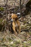 Een verdwaalde hond in het bos Stock Foto