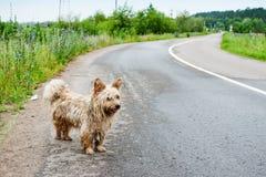 Een verdwaalde hond op de weg royalty-vrije stock foto's