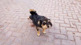 Een verdwaalde hond in San Pedro de Atacama, Chili royalty-vrije stock afbeelding