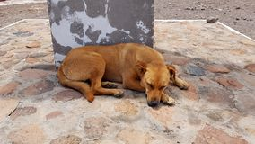 Een verdwaalde hond in San Pedro de Atacama, Chili stock afbeeldingen