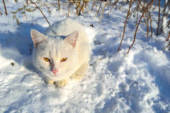 Een verdwaalde kat Stock Foto's