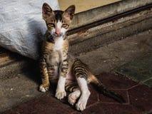 Een verdwaalde kat op de straten kijkt recht in de camera royalty-vrije stock afbeeldingen