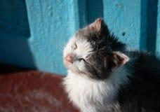 Een verdwaalde vuile kat die in de zon rusten stock afbeeldingen