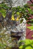 Een verfraaide tuinfontein, Italië stock afbeeldingen