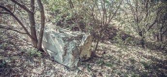 Een vergeten graf in het hout Royalty-vrije Stock Afbeeldingen