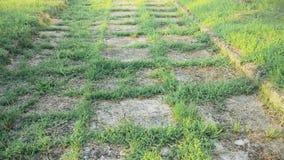 Een verlaten voetweg, het gras van de weg kwam te voorschijn stock video