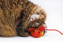 Een vermakelijke kat die naast de muis ligt Stock Fotografie