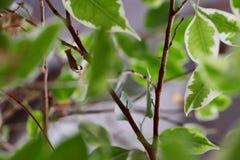 Een vernietigd blad onder groene bladeren royalty-vrije stock afbeeldingen